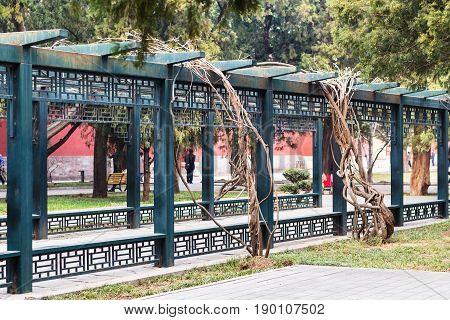 Alley In Public Park In Beijing City In Spring