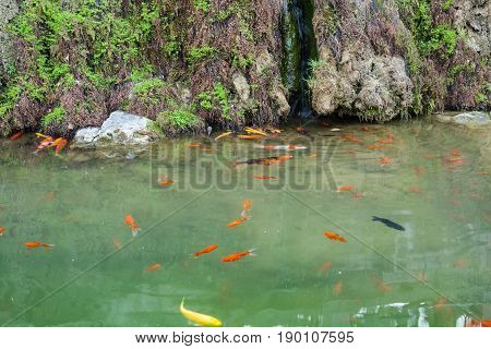 travel to China - gold fishes in Yi river near longmen caves in spring season