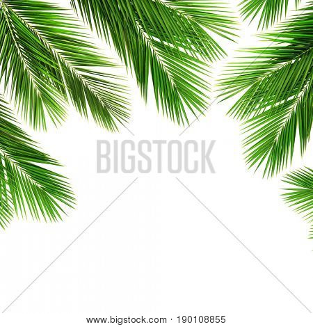 Palm leaf for your design.Frame of palm leaves. Isolated on white background