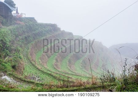 Mist On Rice Terraced Fieilds