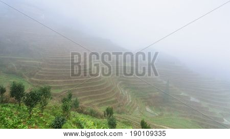 View Of Rice Terraced Fields In Brume