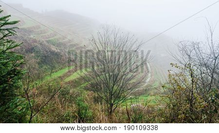 View Of Rice Terraced Hills In Fog