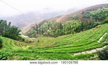 View Of Wet Terraced Rice Fields From Tiantouzhai