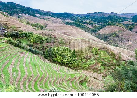 View Of Terraced Fields And Cottage In Tiantouzhai