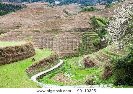 View Of Gardens Near Dazhai Village In Country