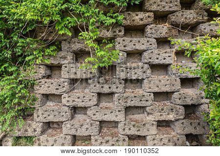 Old brickwork in a checkerboard pattern with gaps. Climbing plants frame the wall. Natural background for design with space for text
