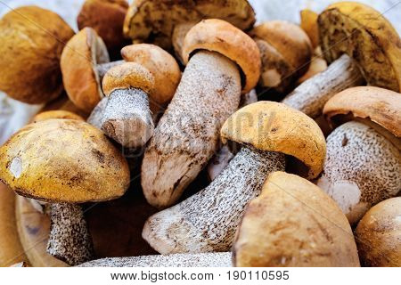 Uncooked wild forest birch mushrooms - brown cap boletus Leccinum Scabrum over dark background. Rustic style natural day light. Top view food background concept. Selective focus
