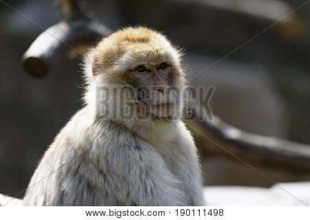 a small Monkey is sitting on a tree