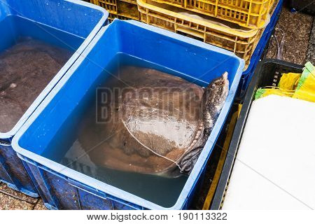 Big Turtle In Fish Market In Guangzhou City