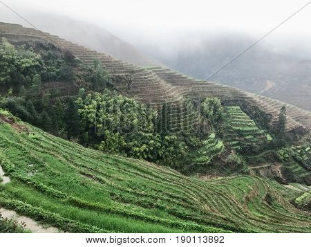 Terraced Rice Fields Near View Point In Rain