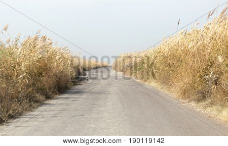 asphalt road in the reeds . A photo