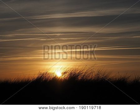 Beautiful golden sundown with silhouette of dune grass on the Baltic sea