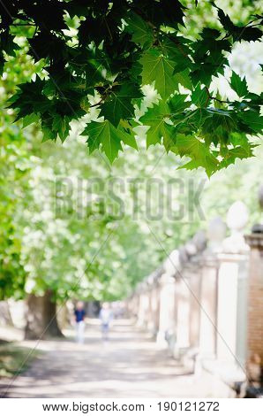 Leaves On The Branch Of A Tree