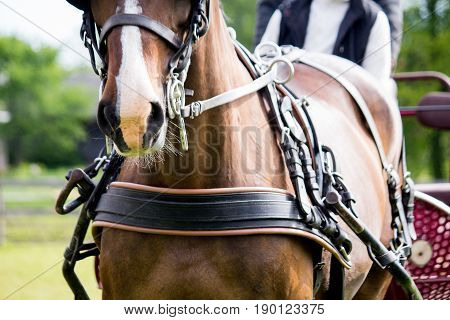 Close Up Of Horse Drawn Carriage Tack