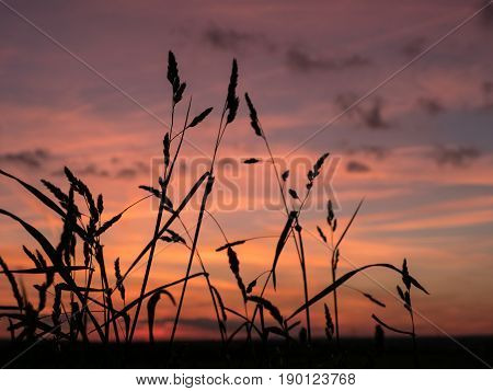 silhouette from grass and colorful sky at sundown