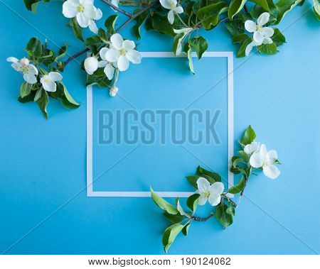 Square Frame With Blossom Apple On Blue Background