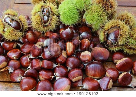 Chestnuts and husks on table after harvesting