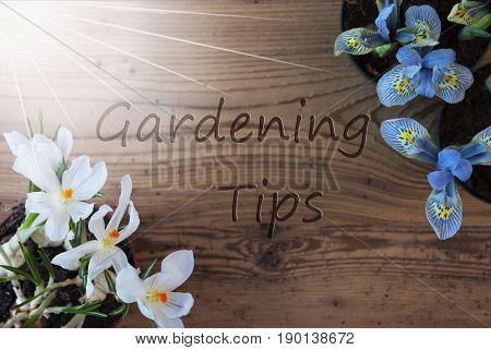 Wooden Background With English Text Gardening Tips. Sunny Spring Flowers Like Grape Hyacinth And Crocus. Aged Or Vintage Style