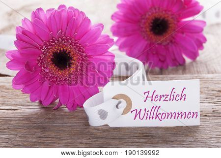 Label With German Text Herzlich Willkommen Means Welcome. Pink Spring Gerbera Blossom. Vintage, Rutic Or Aged Wooden Background. Card For Spring Greetings.