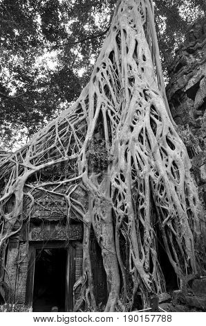 Ta Prohm is the modern name of a temple at Angkor, Siem Reap Province,Cambodia, originally called Rajavihara. Located one kilometre east of Angkor Thom, it was founded by the Khmer King Jayavarman VII