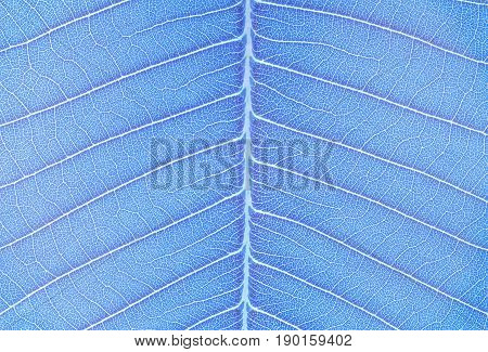 Closeup surface art tone of abstract pattern at the blue fresh leaf textured background in art tone