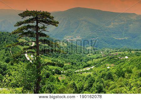 Tara Valley in Montenegro, Europe