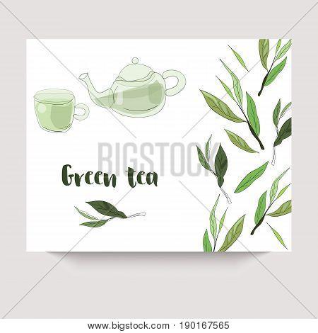 Vector Green Tea Banner With Tea Leaves On White Backgroud. Design For Packaging, Tea Shop, Drink Me