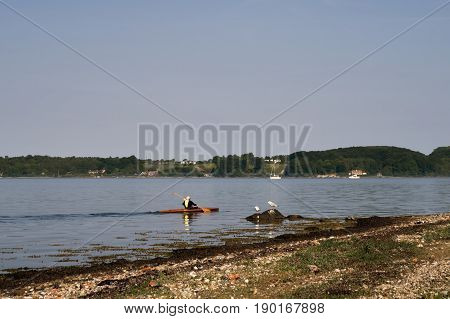 Man kayaking on Little Belt in Denmark close to the beach and two sea gulls.