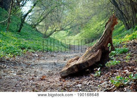 Walkway in summer green park in the forest in warm light with beautiful snag. Outdoor wooded landscape of nice green city park nature