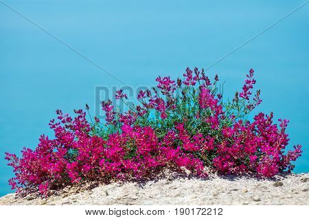 Beautiful flowers against the sea. Summer vacation at sea.