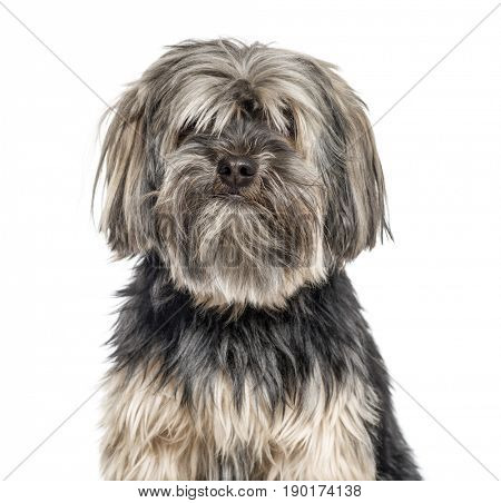 Close-up of a yorkshire Terrier, isolated on white
