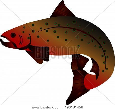 Brook Trout Fish in Color vector Illustration