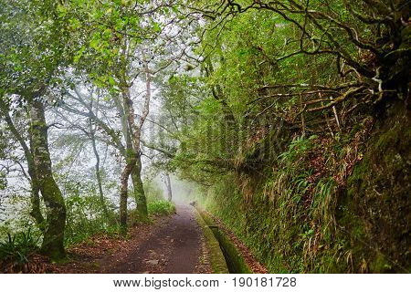 Levada Walk Through Laurel Forest Near Ribeiro Frio On Misty Foggy Day
