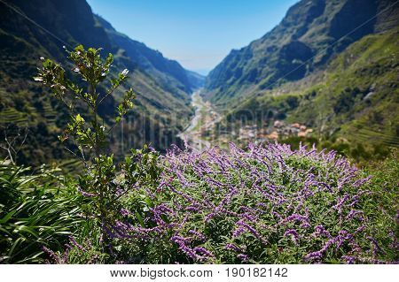 Beautiful Landscape With Purple Flowers And Mountains On Madeira Island