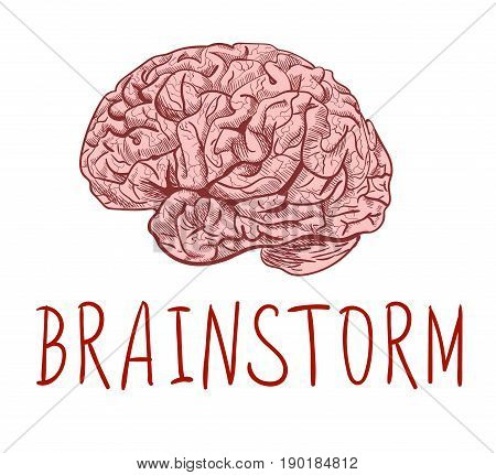 BRAINSTORM. Handwritten letters and outline drawing of human brain. Colored sketch on white background