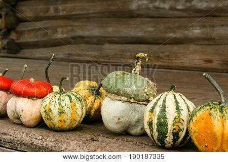 A variety of winter squash lined up in a row