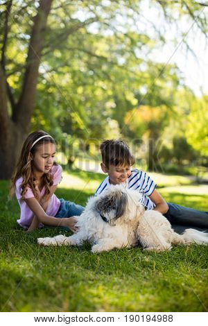 Boy and girl with dog in park on sunny a day