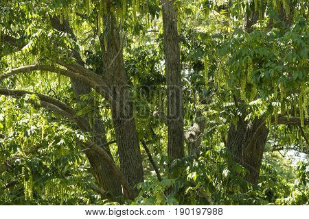 Detail of trees inside a dense jungle