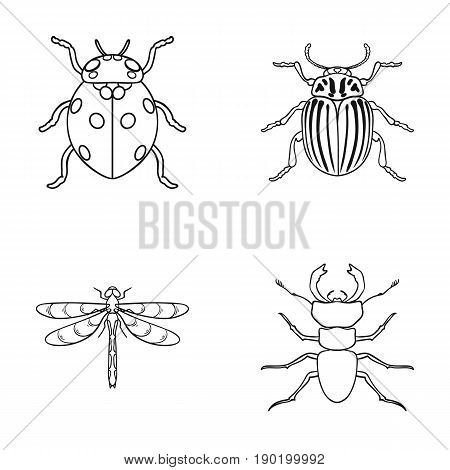 Insect, bug, beetle, paw .Insects set collection icons in outline style vector symbol stock illustration .