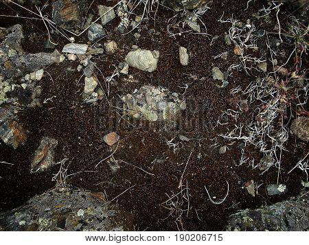 Rocky soil. Brown earth. Soil background, soil texture.Earth, earth background, ground texture.