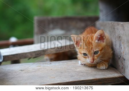 A small brown kitten is crouching on the old planks.