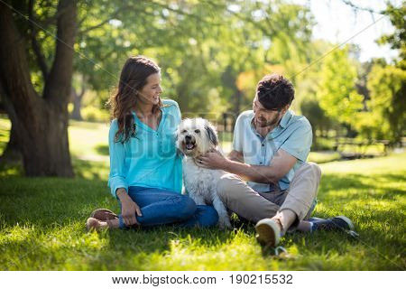 Happy couple with dog in park on sunny a day