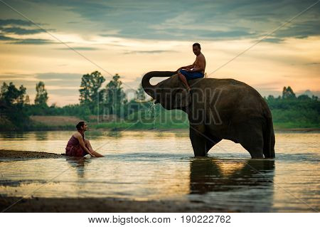 Thailand Two peoples man and woman cheerful playing with an elephant in the river. Lifestyle Kui people in Surin Province Thailand. Thai Elephant is a culture in Thailand