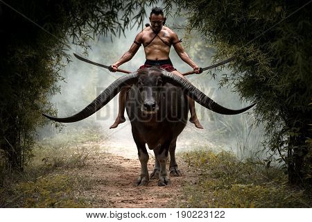Thailand Warrior man swords hands in Thai traditional dress on Buffalo back ready fighting.