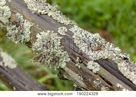 Old wooden handrail overgrown with moss. Carpathians
