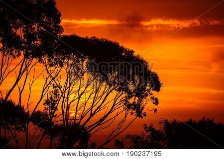 Dramatic sunset across gumtrees viewed from Windy Point South Australia