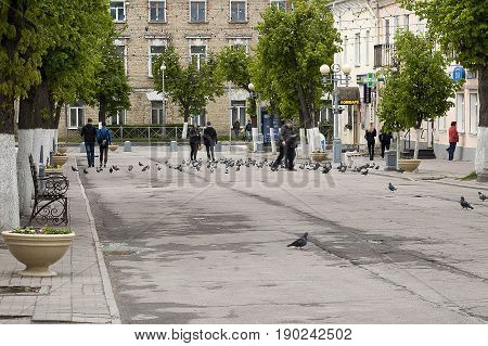 Gatchina Leningrad region Russia - June 03 2017: Citizens and tourists feeding pigeons in Cathedral street.