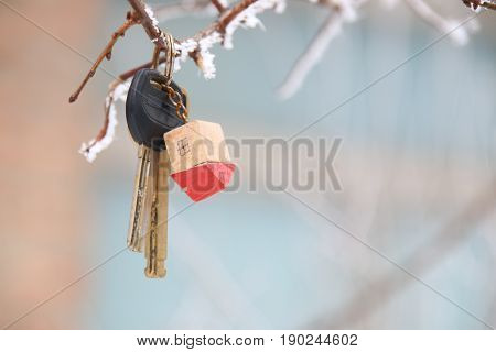 House keys with House Keychain on a tree branch