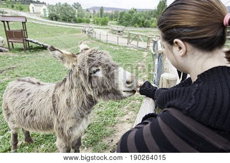 Woman With Donkey