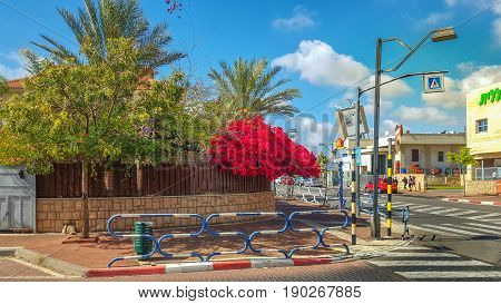 Rishon LeZion, Israel-April 14, 2016: A large bright red bush growing above the surface of a brown wooden fence. Seems it is going fall on a sidewalk in this residence district. House with red roof is hidden by green foliage under blue sky. There is aspha